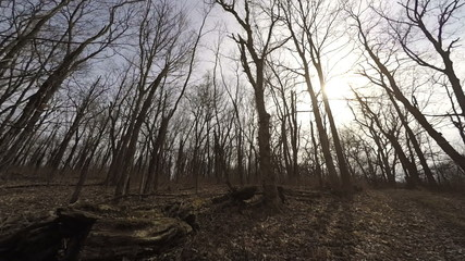 Bare forest