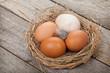 Leinwanddruck Bild - Eggs nest
