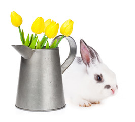 Yellow tulips in watering can and easter rabbit