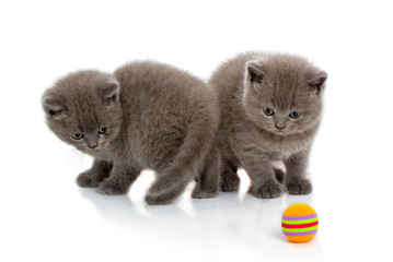 Two grey striped kittens isolated on a white