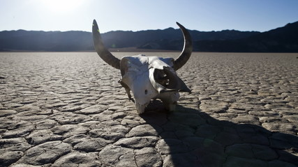 Pan of Desert Floor with Cow Skull - Death Valley