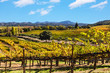 California wine country landscape - 78927955