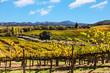 Leinwanddruck Bild - California wine country landscape