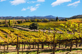 Fototapety California wine country landscape
