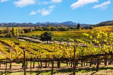 California wine country landscape