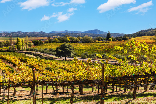Poster Cultuur California wine country landscape