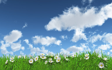 Daisies in grass on a sunny day