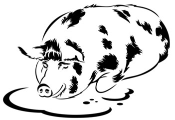 isolated silhouette image of a sleeping farm pig