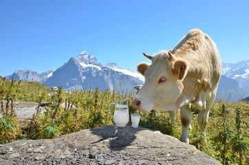 Cows and milk, Switzerland