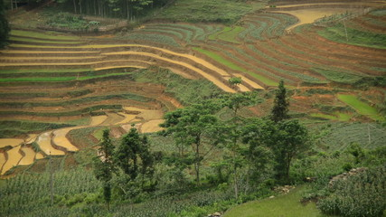 Time Lapse Pan of Rice Terraces in Green Valley - Sapa Vietnam