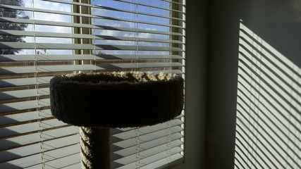 Time Lapse of Cat in Window with creeping shadows