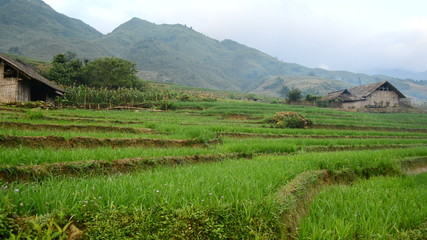 Zoom Out of Farm with Rice Terraces in Valley Sapa Vietnam
