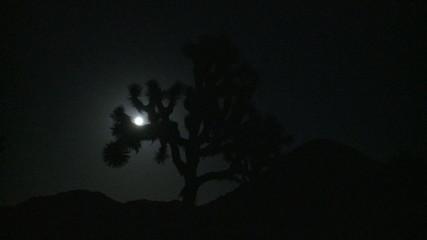 Moon passing through Joshua Tree at Night