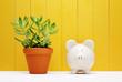 Piggy Bank Beside Small Plant on a Pot