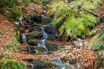 Small river in autumn beech forest.
