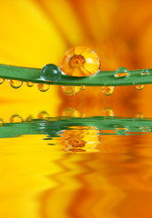 flower inside drop