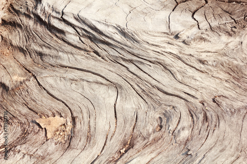 canvas print picture Pattern of wood decay