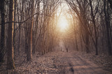 Man walking in forest at sunset