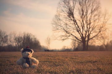Old toy bear sit in  field at sunset