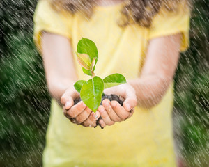 Child holding young plant in the rain