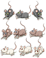 A group of mice