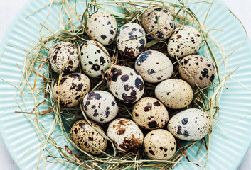 Easter - quail eggs with hay on pastel blue plate from above