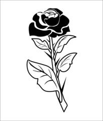 Stem roses
