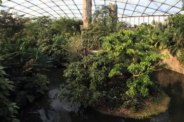 Botanical garden indoor rainforest