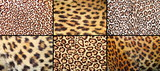 collection of leopard pelt textures poster