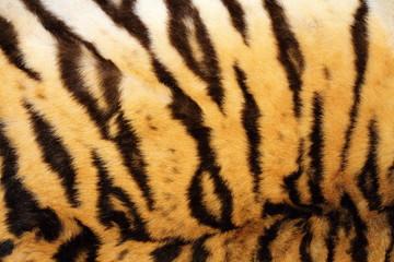 black stripes on real tiger fur