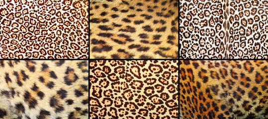 collection of leopard pelt textures