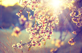 Beautiful nature scene with blooming tree and sun flare poster