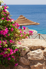 Sea, bougainvillea and beach umbrella