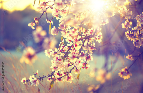 Foto Spatwand Bomen Beautiful nature scene with blooming tree and sun flare
