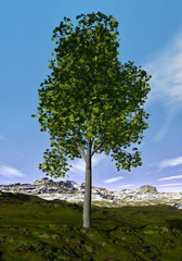 Ohio buckeye tree - 3D render