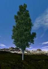 Pine tree - 3D render