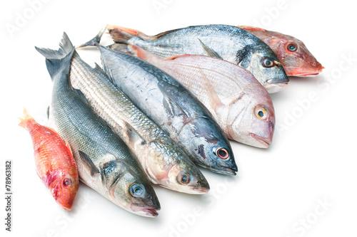 Sea food - 78963182