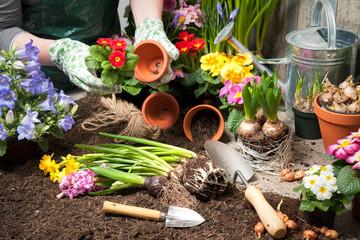 Gardener working in the flower garden