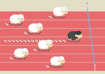 sheep race
