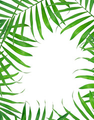 Green leaves of fern background