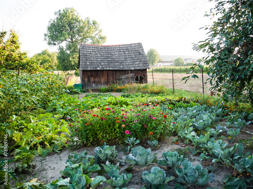 Fresh vegetables garden - 78969746