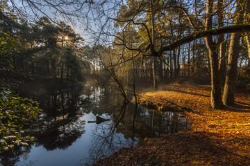 Misty lake in the middle of woodland in Poole
