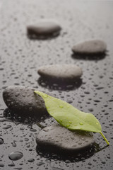 Stones with leaves and water drops, close up