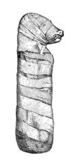 Ancient Egypt : Animal Mummy - Momie d'Animal