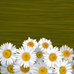 Green striped background with many flowers of camomile