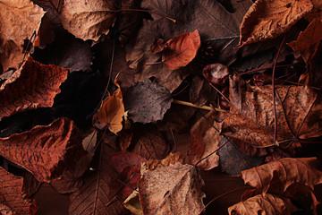 texture fallen leaves autumn macro