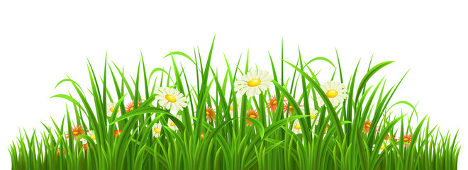 Green grass with flowers on white, vector illustration