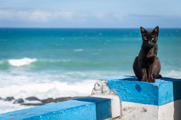 Portuguese Black cat, Praia das Macas