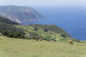 Caballos salvajes en la zona de Cedeira (La Coruña, España).