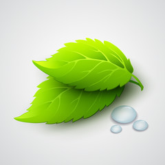 Vector illustration of green leaves and dew drops